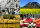 [RANK AND TALK] Top 4 Korean Spring Flower Festivals